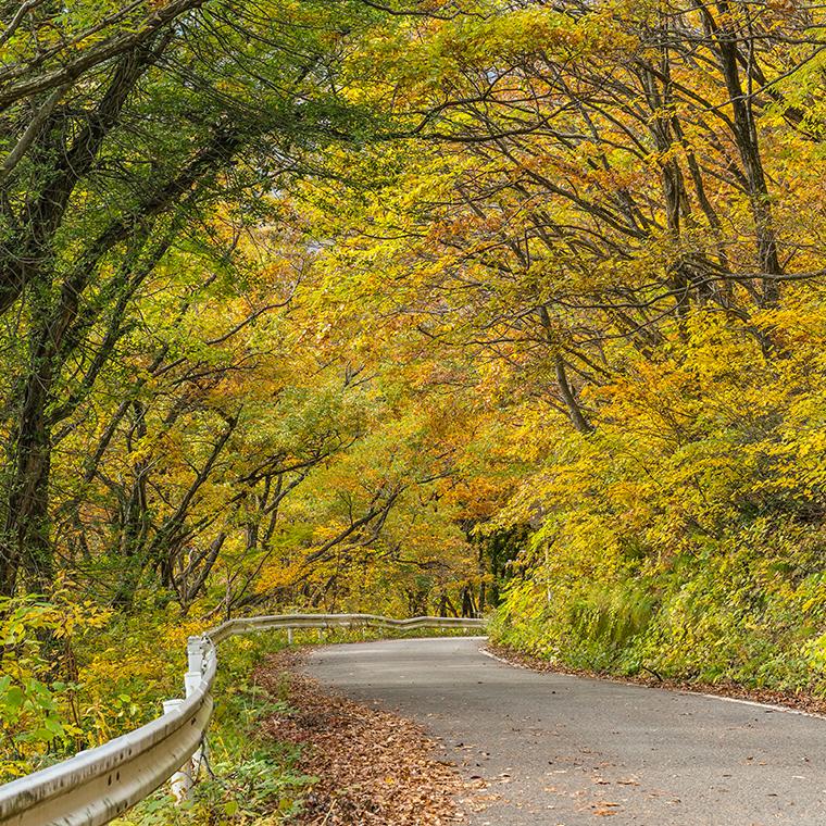 美しい秋の木々